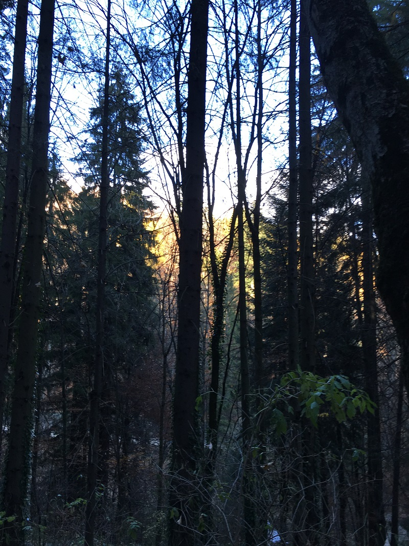 Sinaia_forest
